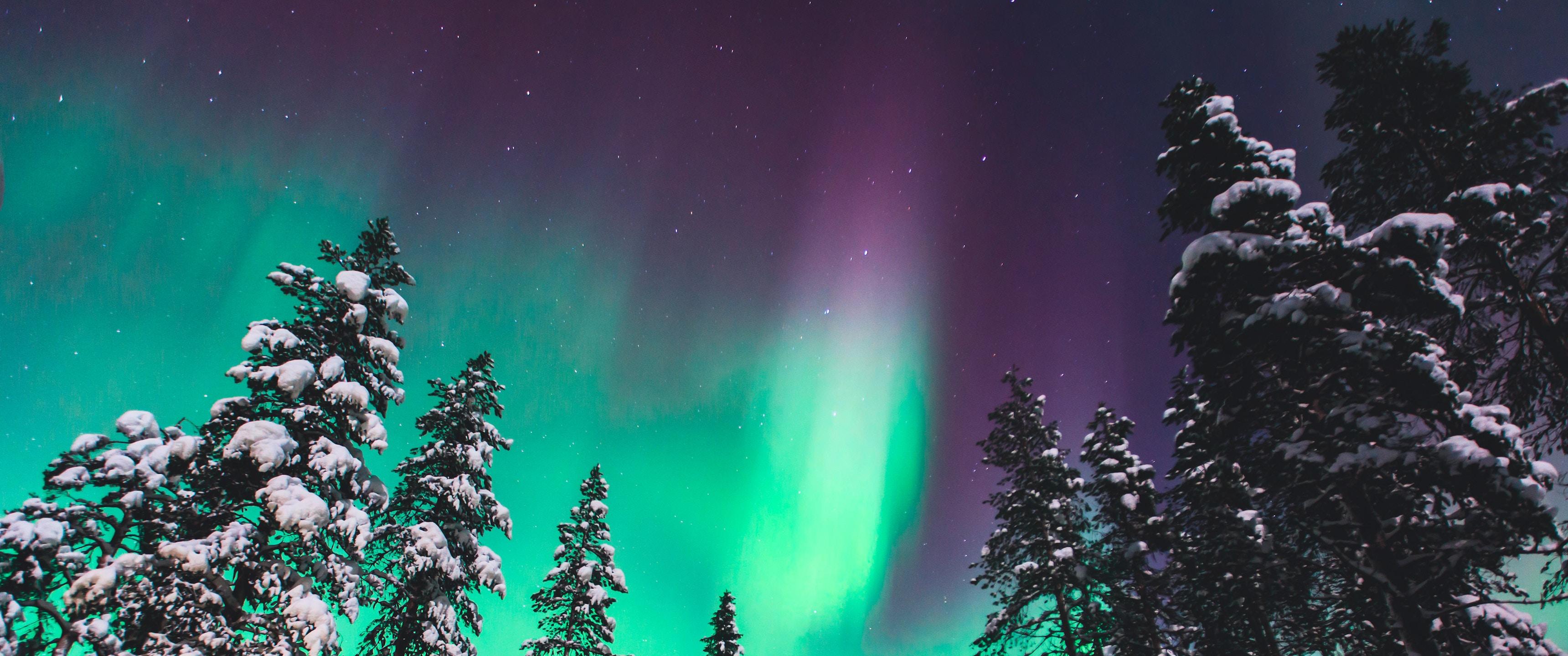Vinterbild (Copy) (Copy)